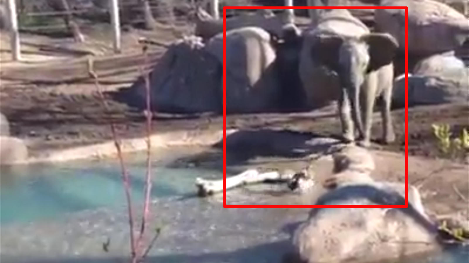 viral-video-elephant-calfs-day-out-with-a-bird