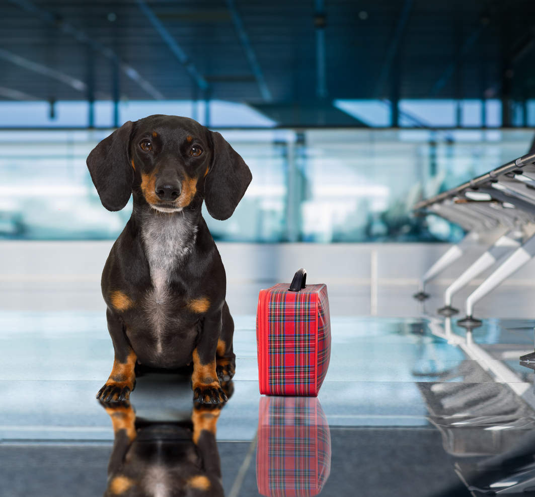 Emotional-support animals on aeroplanes likely to be banned soon