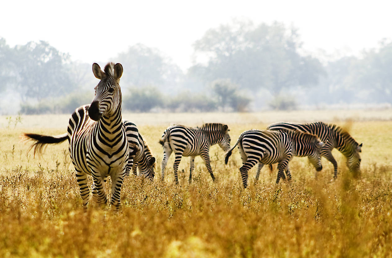 Gujarat: Kevadia Zoological Park near Statue of Unity to open soon