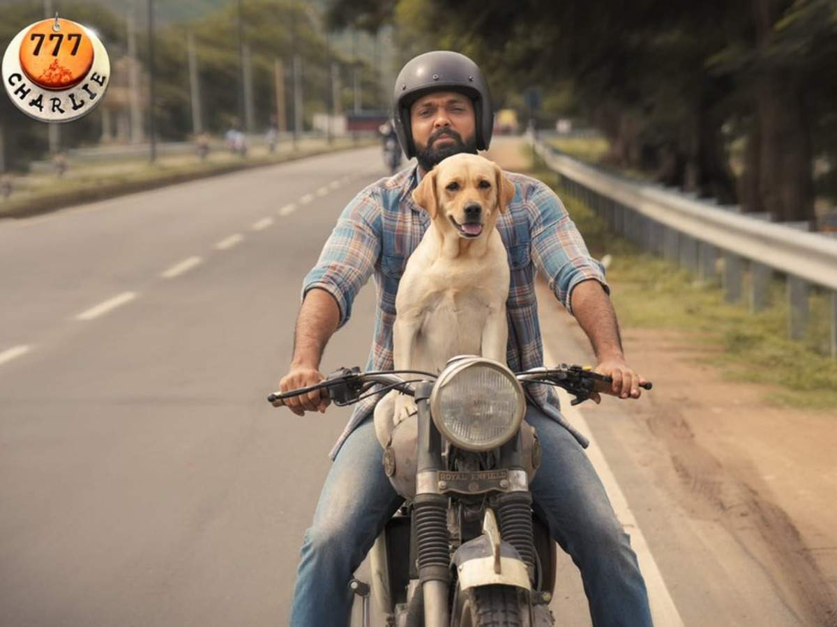 Rakshit Shetty's '777 Charlie' completes 100 days of shooting | Kannada  Movie News - Times of India