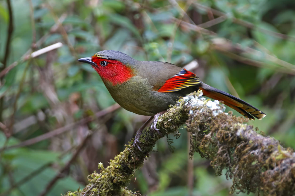 Arunachal Pradesh to host bird festival from March 22 to boost ecotourism