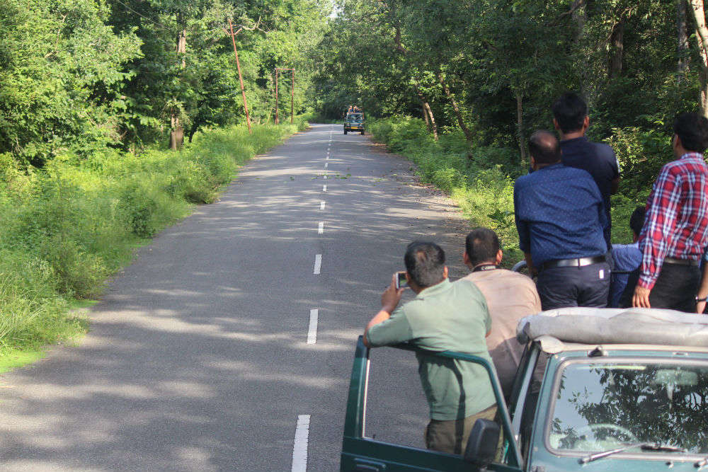 Coronavirus India: Jim Corbett, Rajaji National Park prohibit all tourist activities till March 31