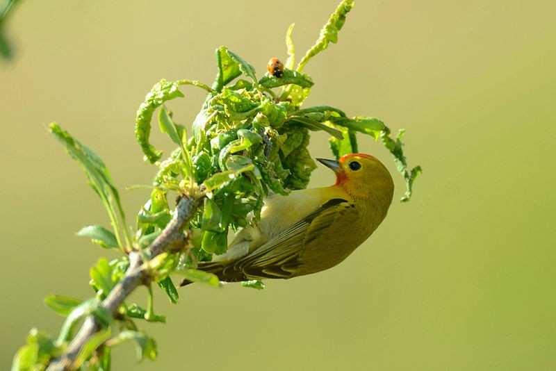 Rare Himalayan bird shows up in Bhondsi Nature Park near Delhi