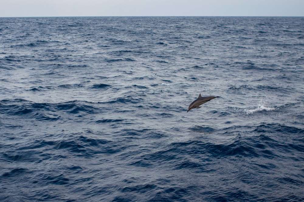 Videos of dolphin playing in Mumbai sea amid COVID 19 lockdown are going viral