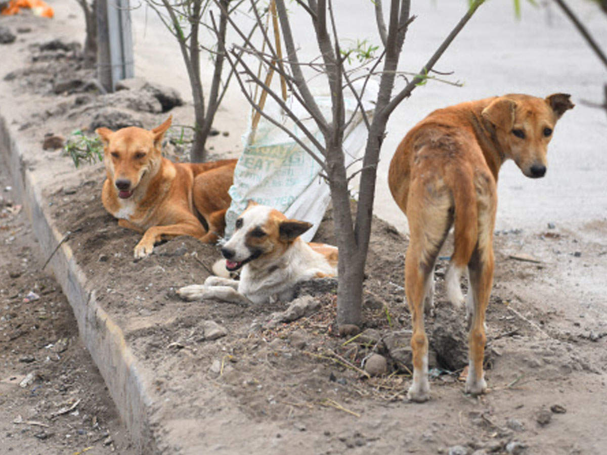 Saving the strays: Good samaritans feed furry friends in Chennai ...