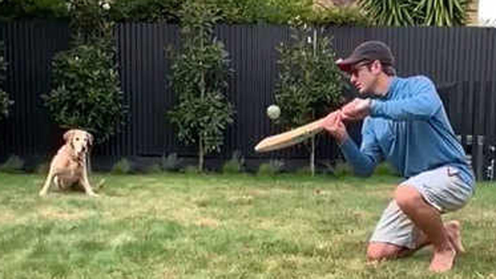 new-zealand-skipper-kane-williamson-gives-pet-dog-slip-catching-practice