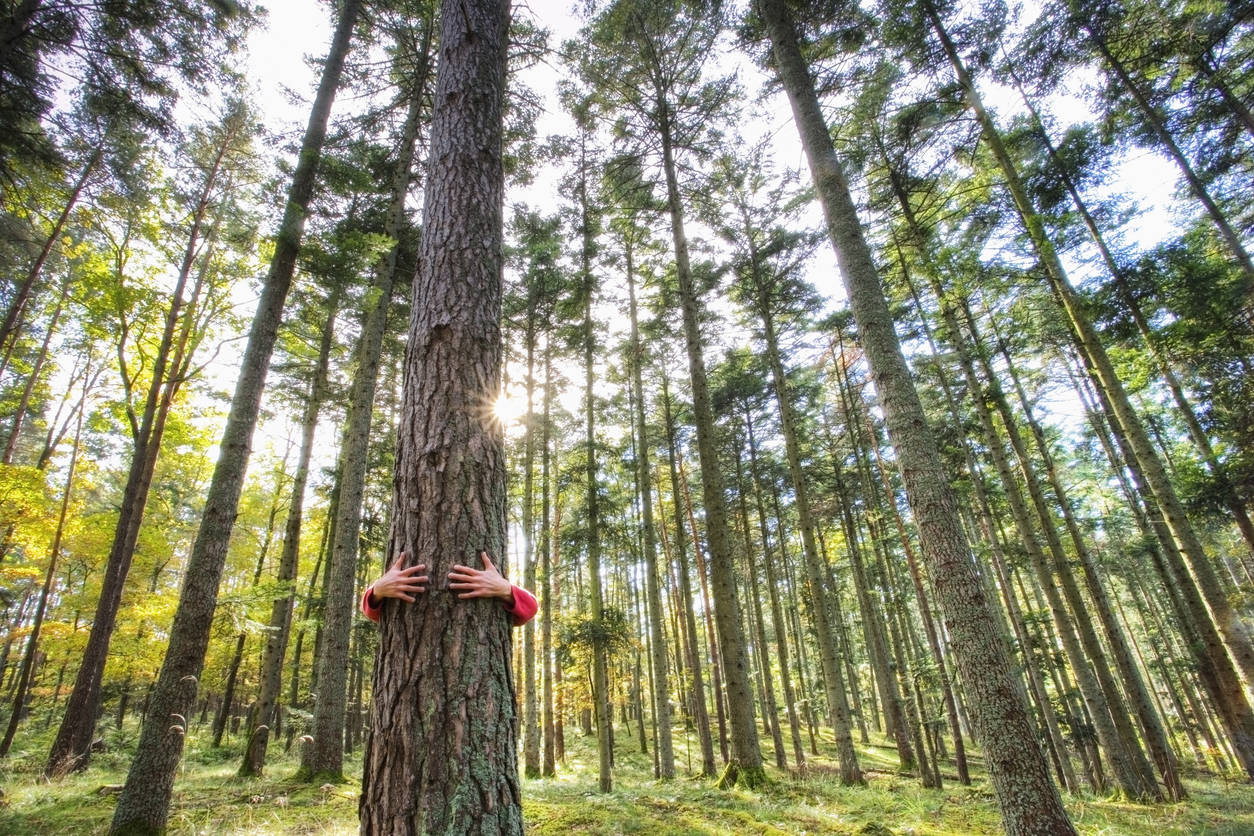 Iceland battles isolation with tree hugging