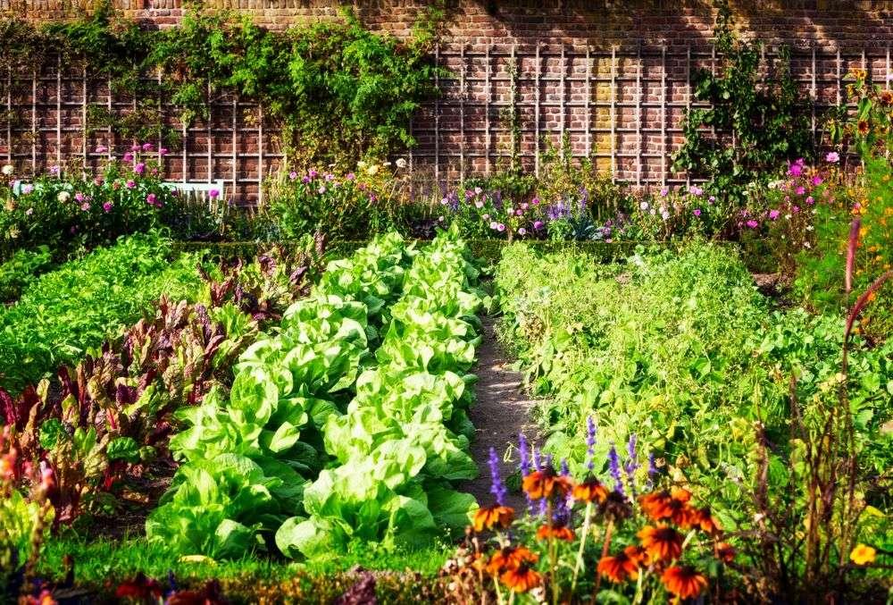 Srinagar residents to soon grown their own food; SMC makes kitchen gardening mandatory