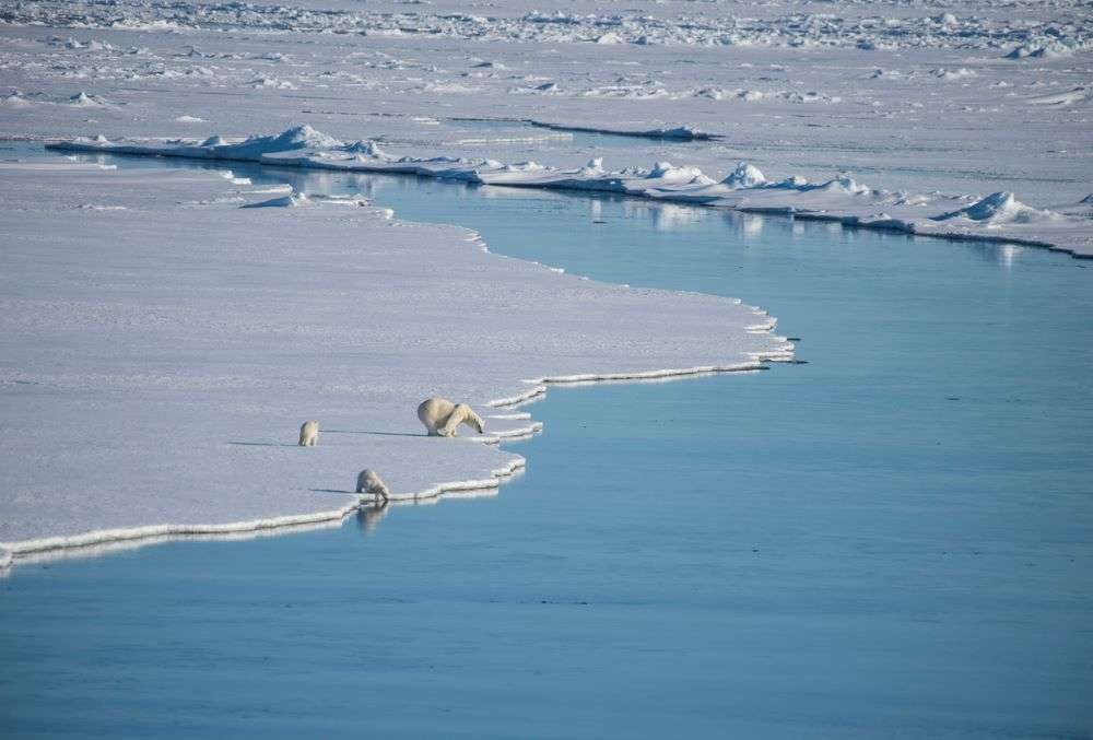 Arctic Ocean will likely see ice-free summers before 2050, says study
