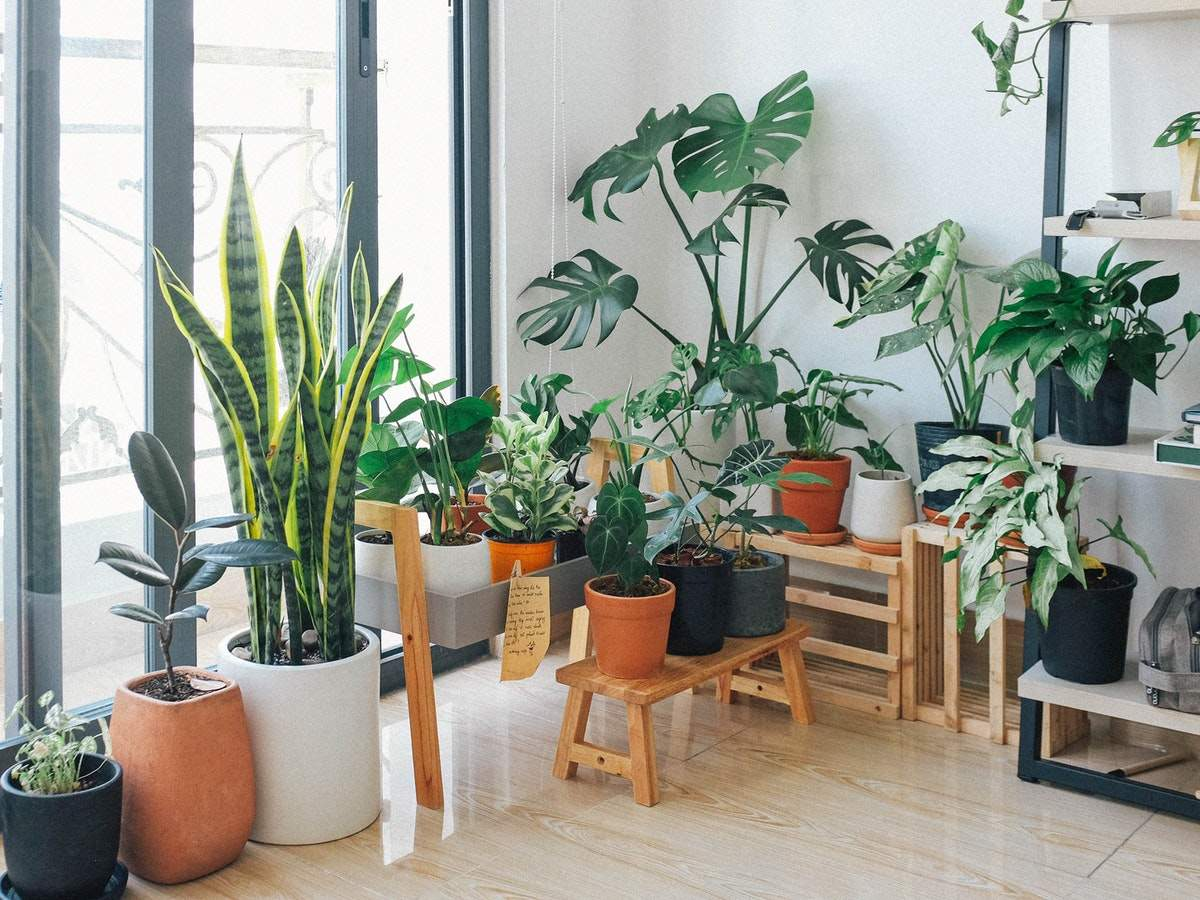 Top Products To Master The Art Of Indoor Gardening Most Searched