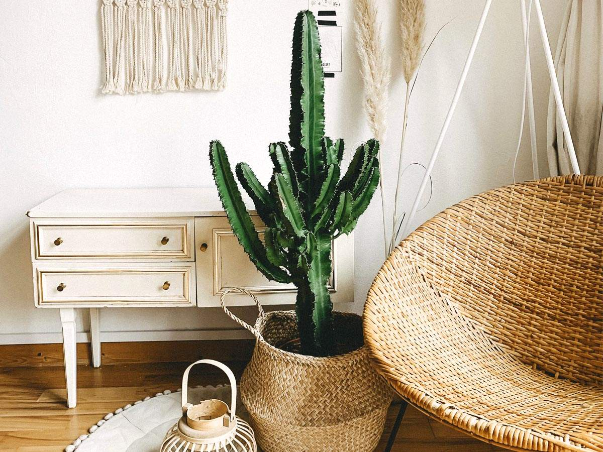 Upbeat home decor items that will make you feel cheerful  Most