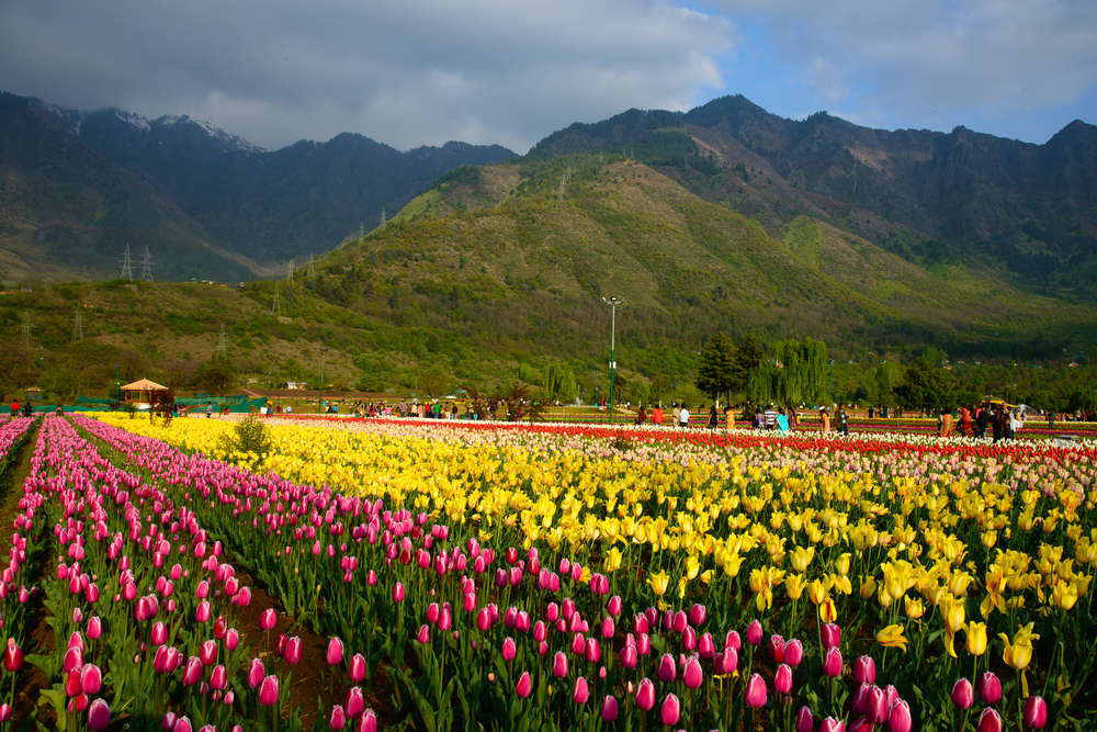 From rainbow roses to daffodils –flowers are blooming across the earth during lockdown