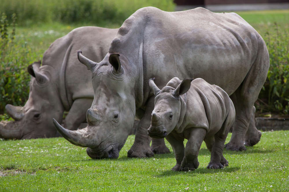 COVID-19: You can adopt an animal and donate to Uganda's zoos, wildlife sanctuaries before they run out of funds