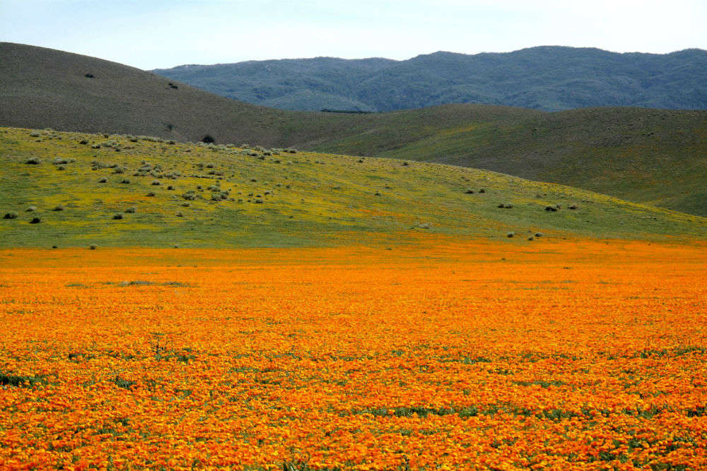 California's orange poppy bloom is so bright that it is visible from space; NASA shares pictures