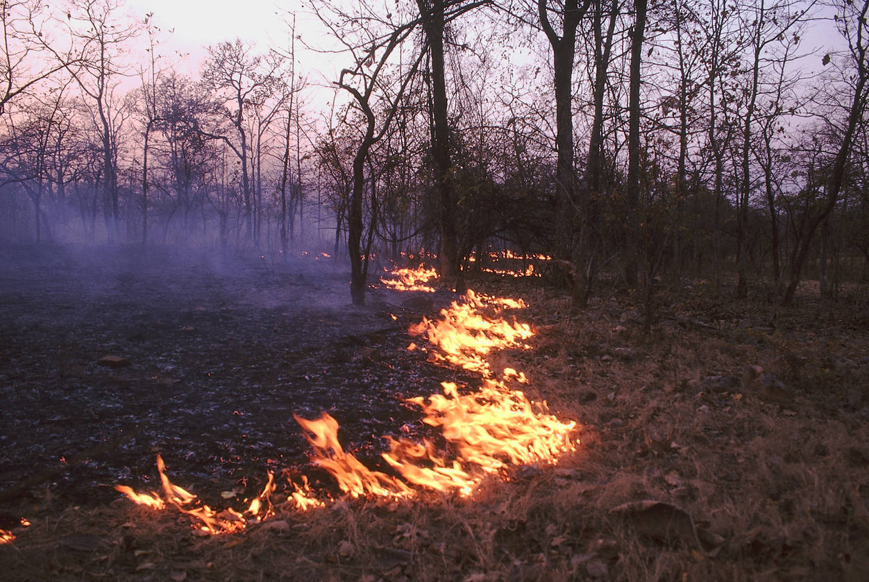 Forest fires reported from Uttarakhand