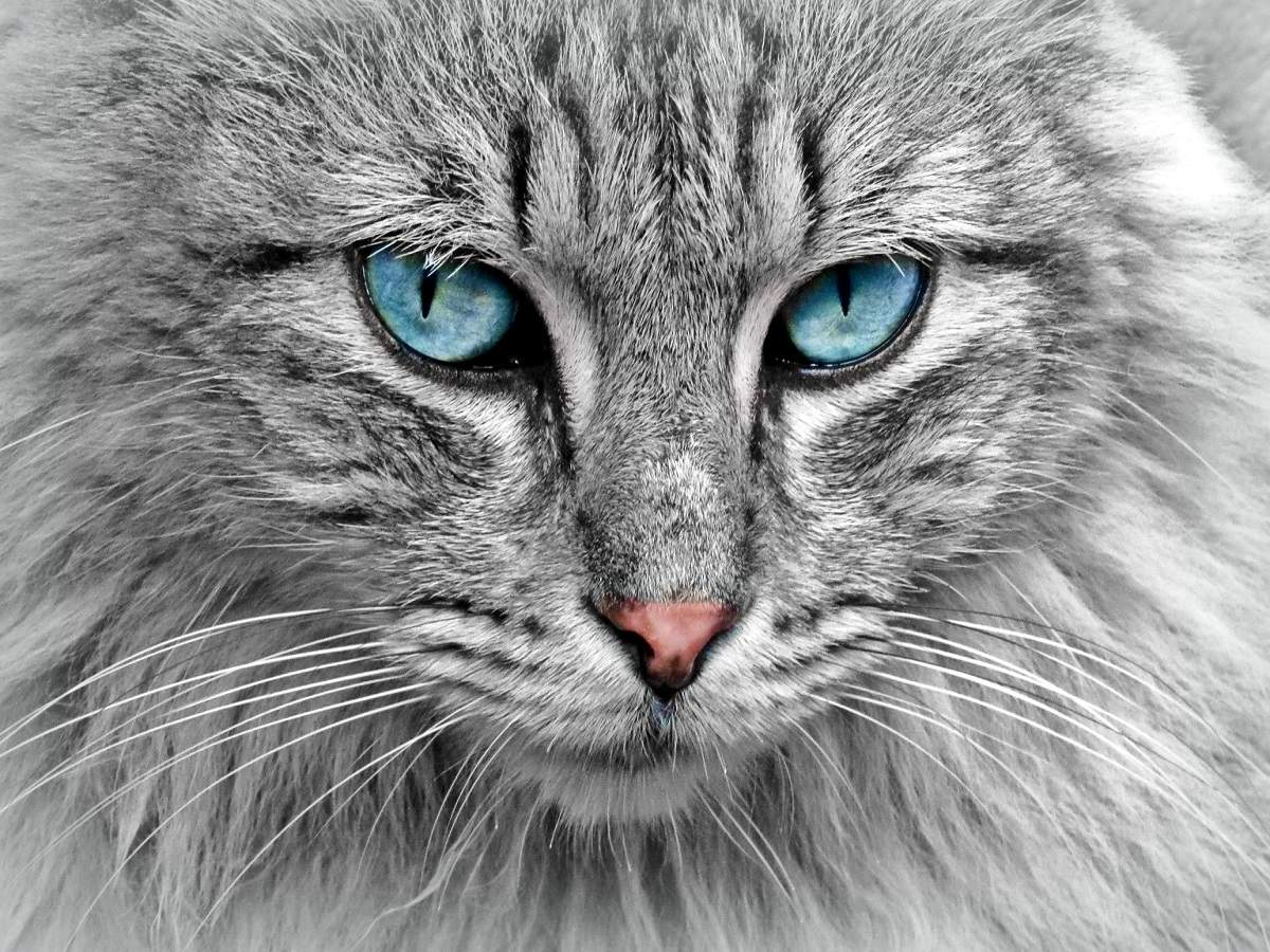 Persian cat food for the special needs of furry cats | Most Searched  Products - Times of India