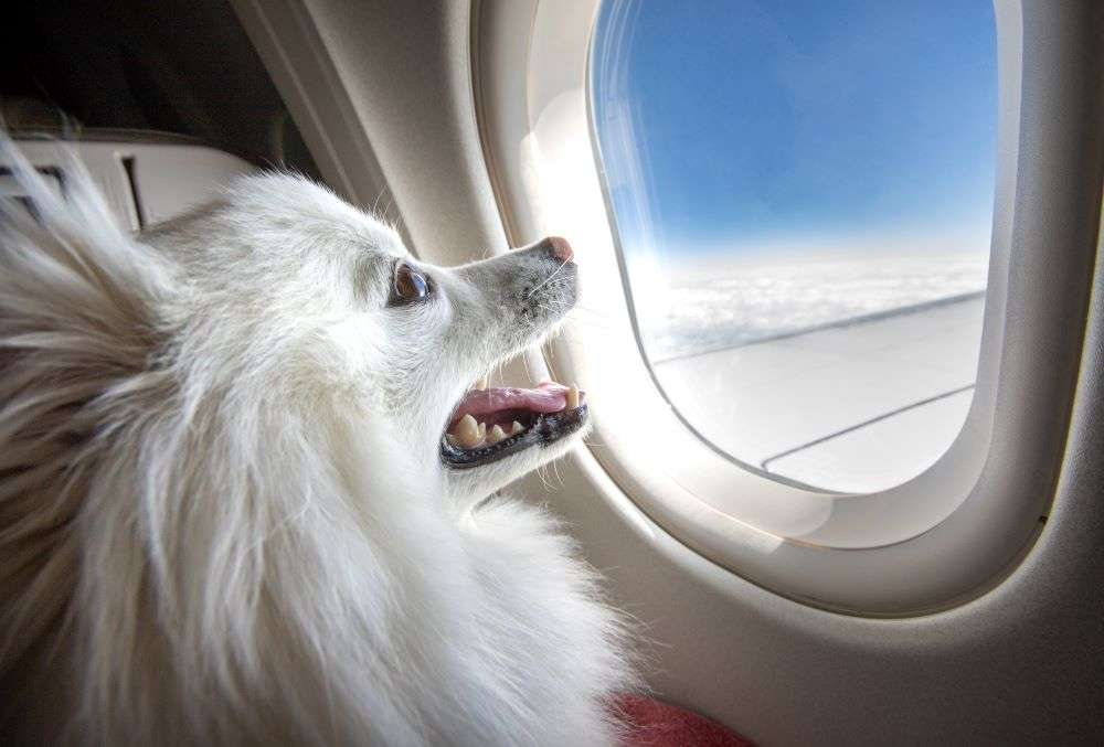An 'all-pet' private jet hired to airlift pets from Delhi to Mumbai
