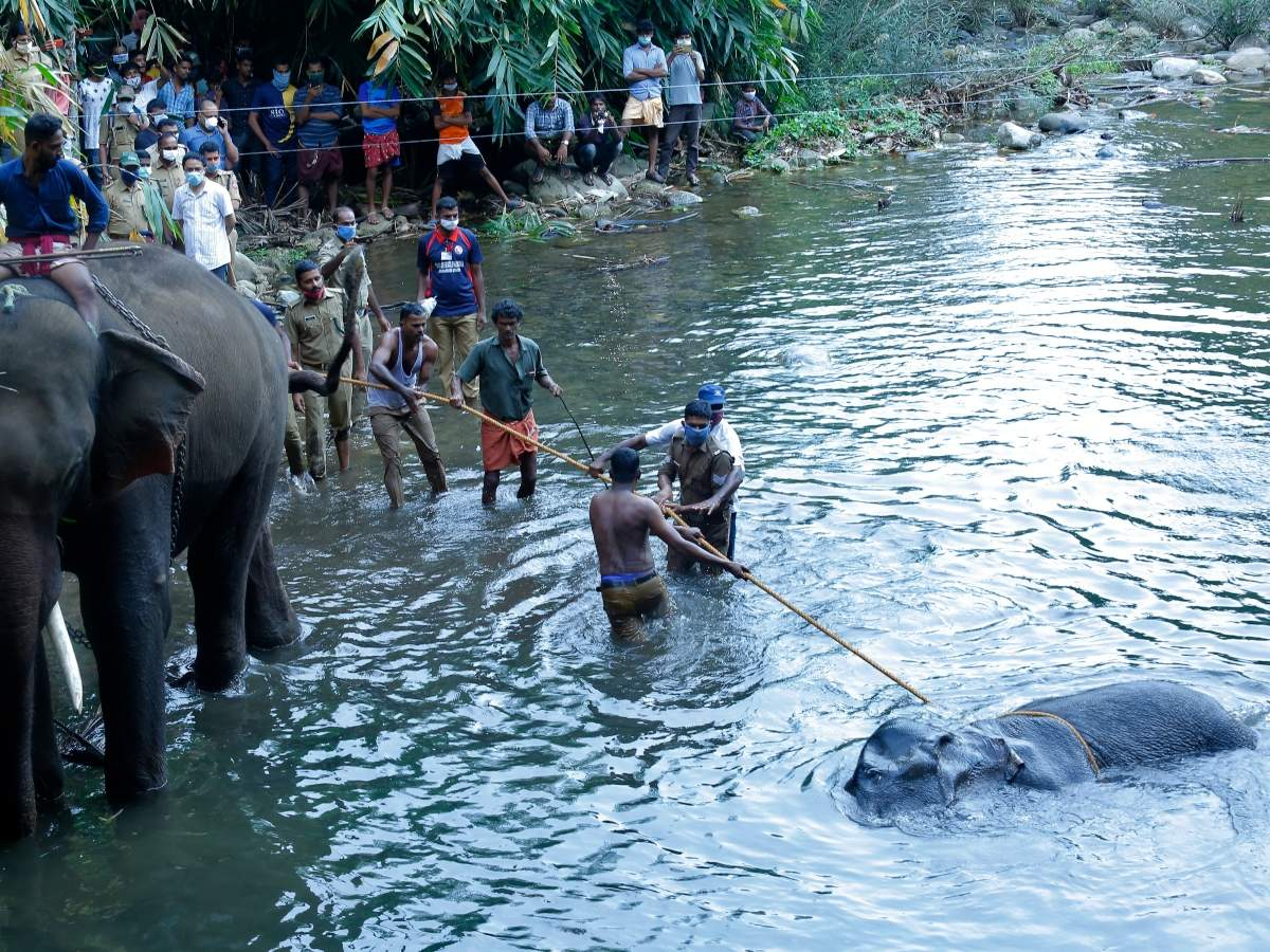 Kerala elephant death: Union environment min asks conservationists to list cruel practices that kill wildlife - Times of India