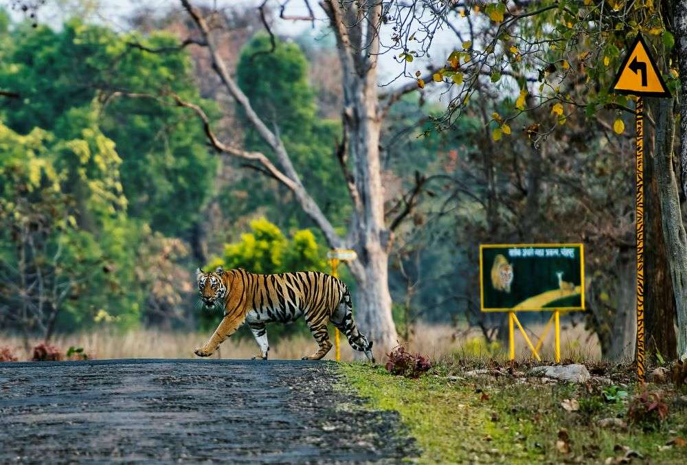 Uttarakhand's Jim Corbett and Rajaji tiger reserves to reopen for eco-tourism activities