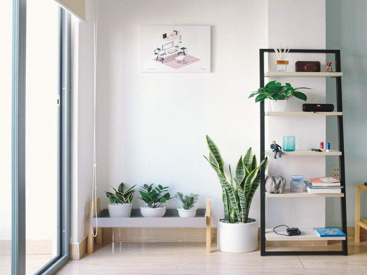 5 House Plants That Thrive During The Monsoon Season Most Searched Products Times Of India