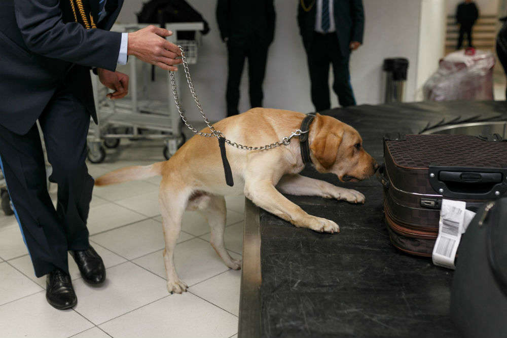 Dubai Airport becomes the first to deploy dogs to sniff and detect Coronavirus