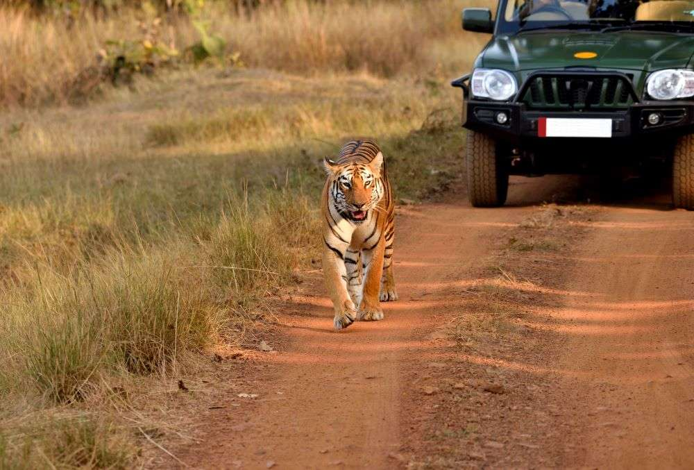 MP launches 'Buffer Mein Safar' to invite tourists to explore its wildlife this monsoon