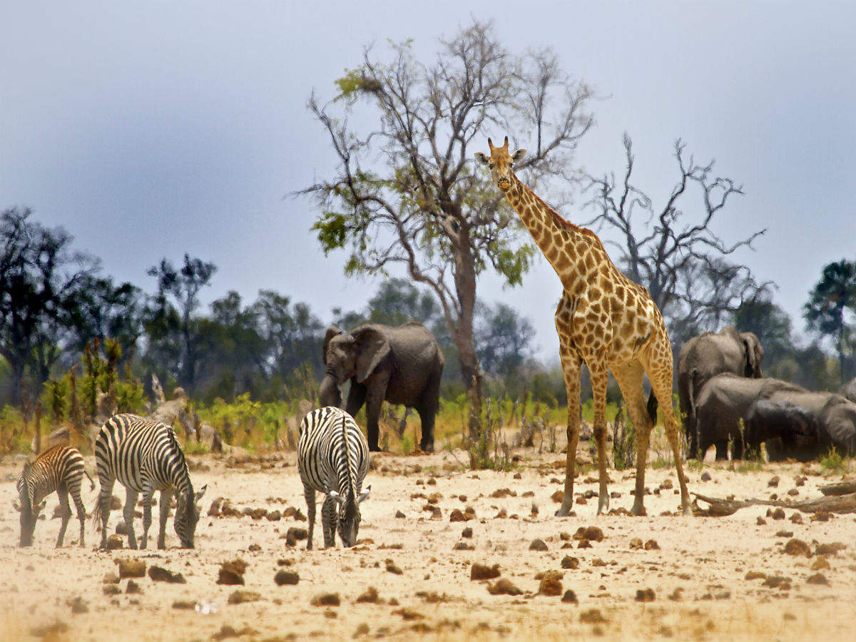 Zimbabwe plans to welcome back overseas tourists from October 1