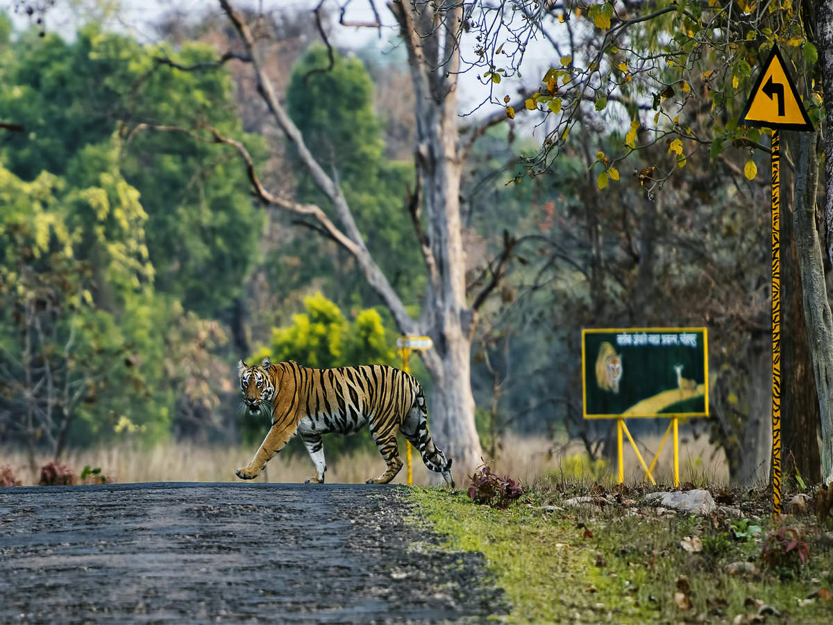 Tadoba-Andhari Tiger Reserve and other wildlife sanctuaries reopen; here are the safety rules