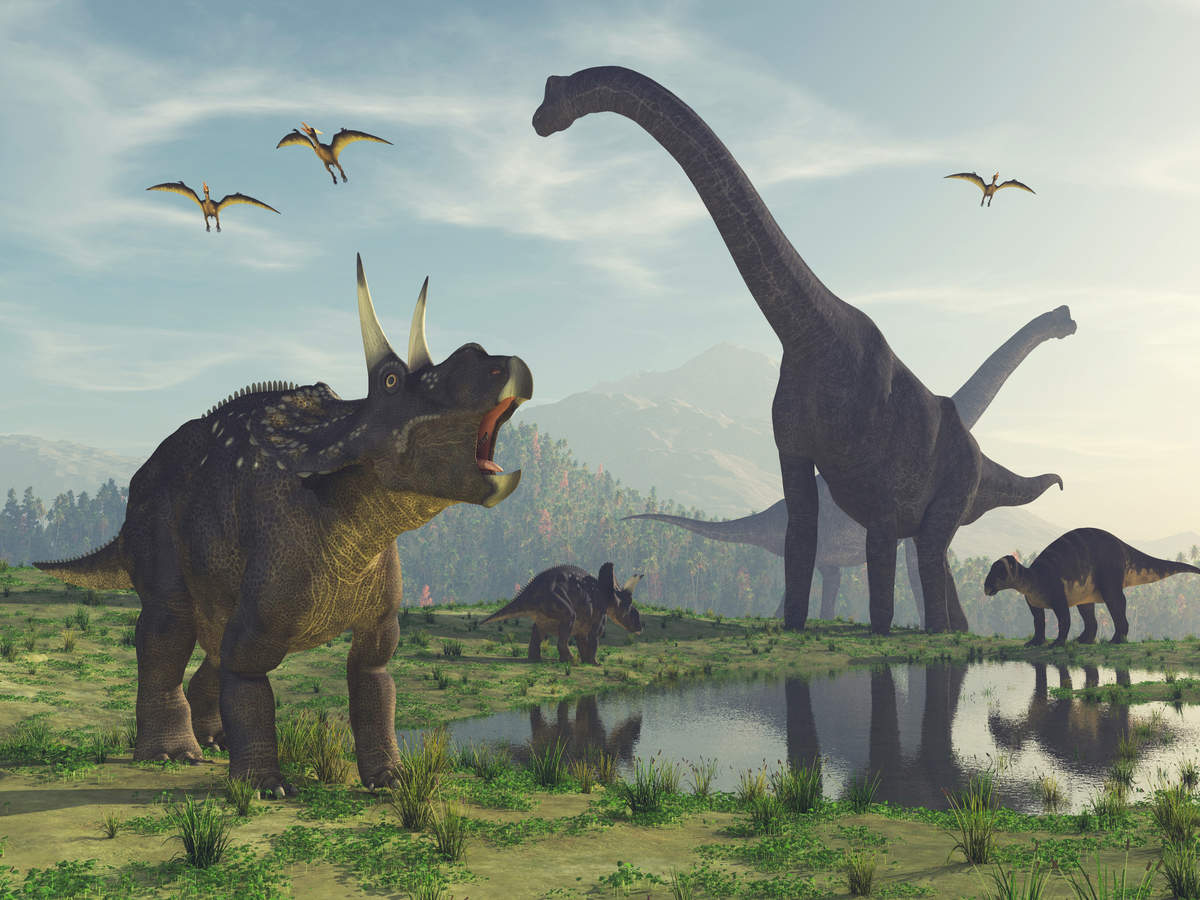 Fossils from Jurassic period found in Jharkhand; dinosaur eggs are a probability too!