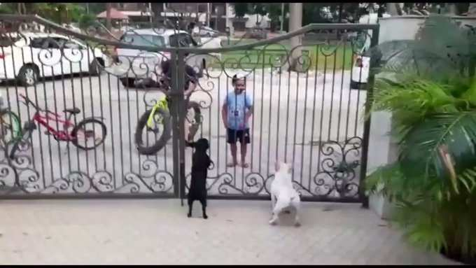 Viral Video Boy S Bhangra Moves In Front Of Two Dogs Will Make Your Day Times Of India