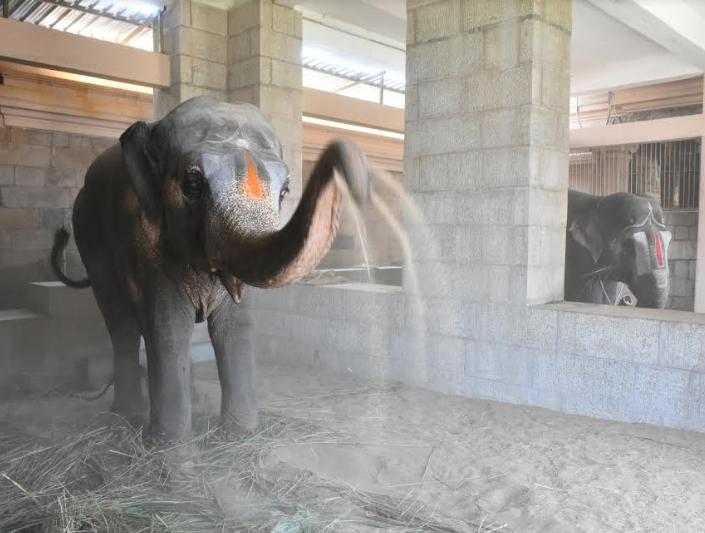 Devotee Donates Elephant To Srirangam Temple Trichy News Times Of India మావటితో మాట్లాడుతున్న శ్రీరంగం దేవాలయం ఏనుగు. devotee donates elephant to srirangam