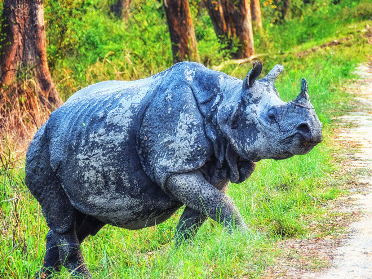 COVID-19: Kaziranga National Park to welcome tourists from October 21