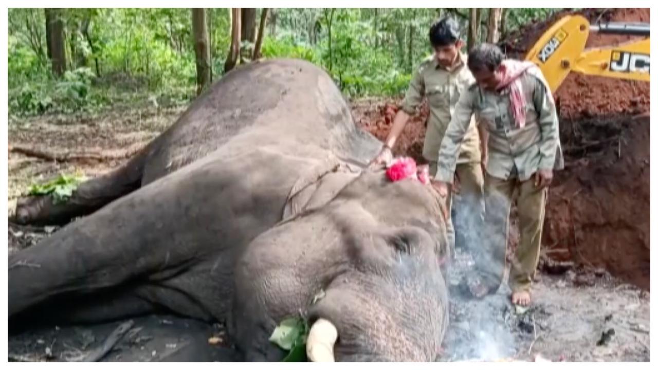 tusker-dies-due-to-cardiac-arrest-at-shivamoggas-sakrebailu-elephant-camp