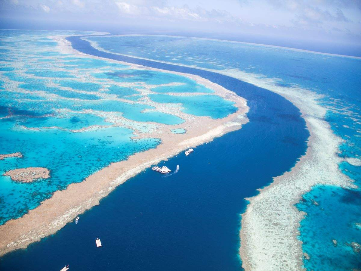 Coral reef taller than the Eiffel Tower discovered in the Great Barrier Reef!