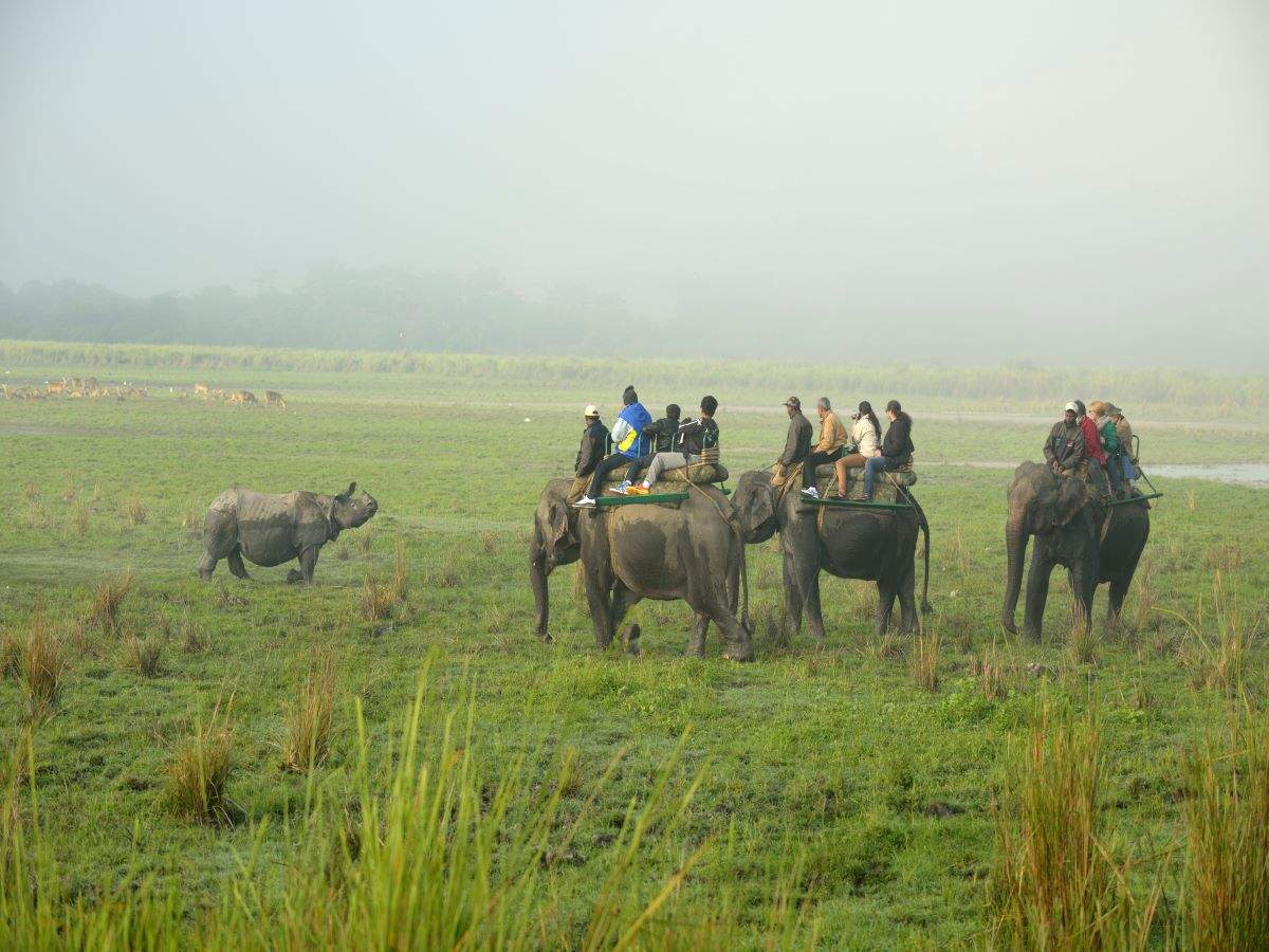 Kaziranga National Park starts elephant safaris; COVID-19 protocol in place