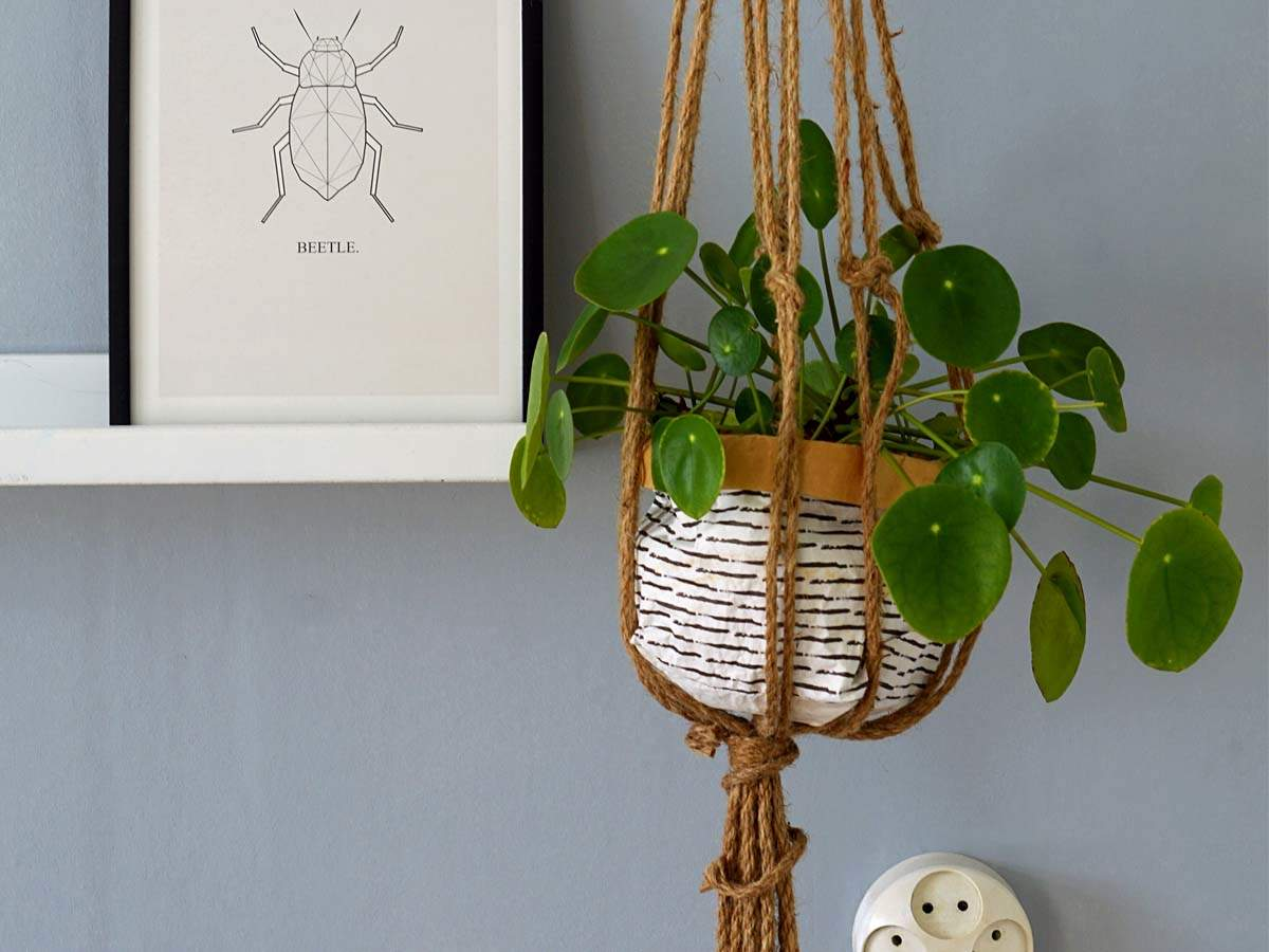 Hanging Planters Stylish Hanging Planters For Your Indoor Plants And Garden Most Searched Products Times Of India