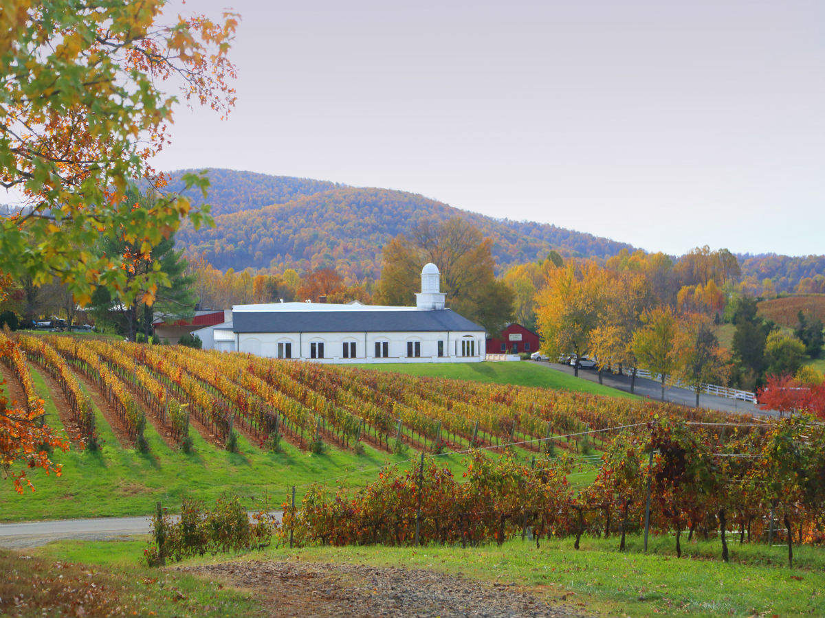 The Birthplace of American Wine: The Untold Story behind Virginia's Vines