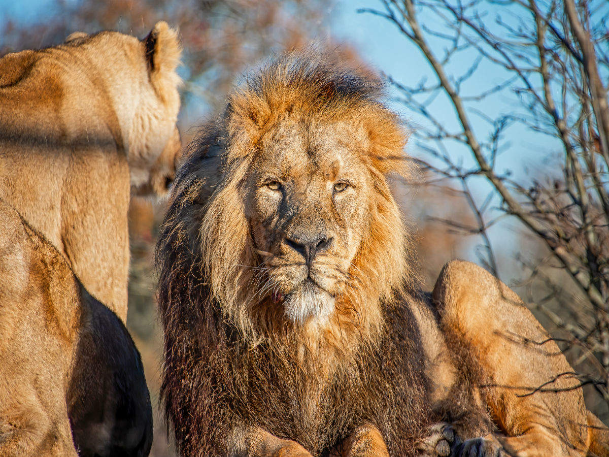 Jamnagar in Gujarat to have the 'largest zoo in the world'
