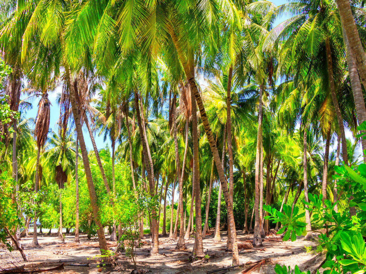 All about Seychelles's massive reforestation initiative