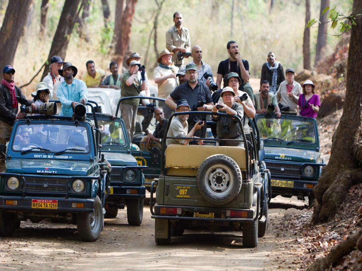 Gujarat for wildlife lovers: top five picks