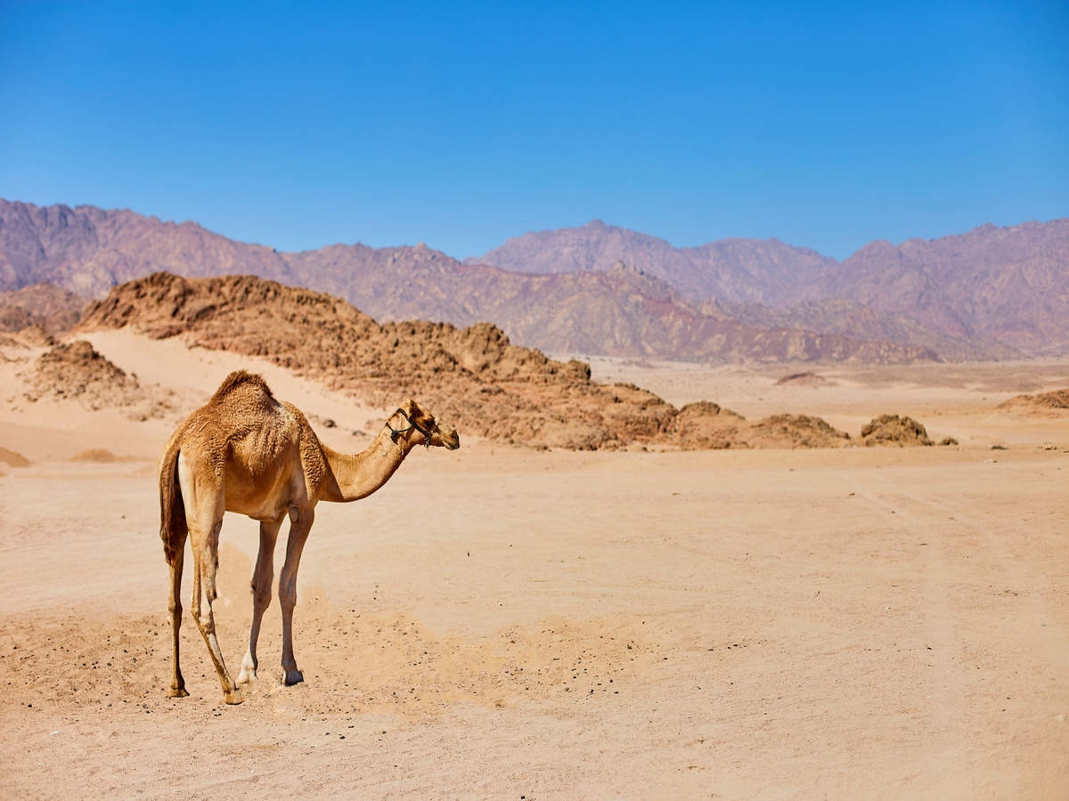 The most wish-listed deserts in India