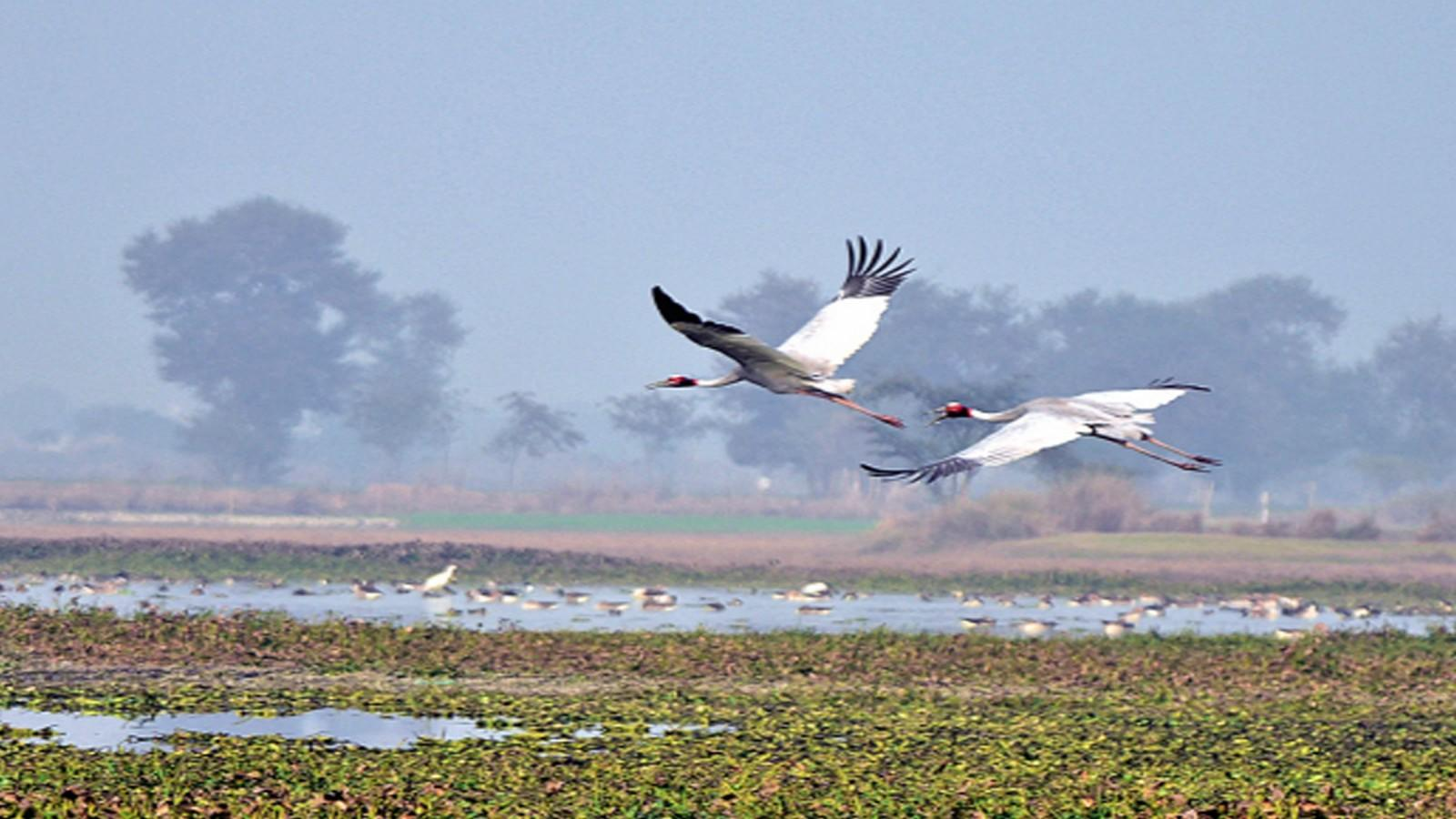 noida-why-the-dhanauri-wetland-is-in-dire-need-of-conservation