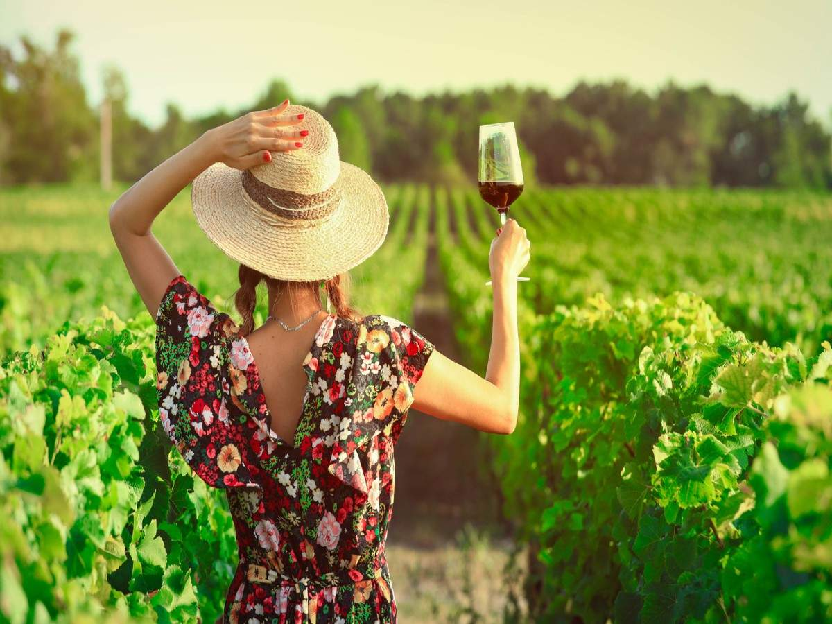 Exploring France through its famous wine regions