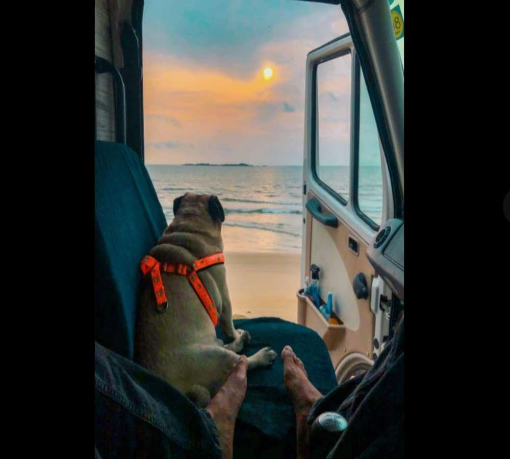 This YouTuber travelled through 10 Indian states with Popu, the pug