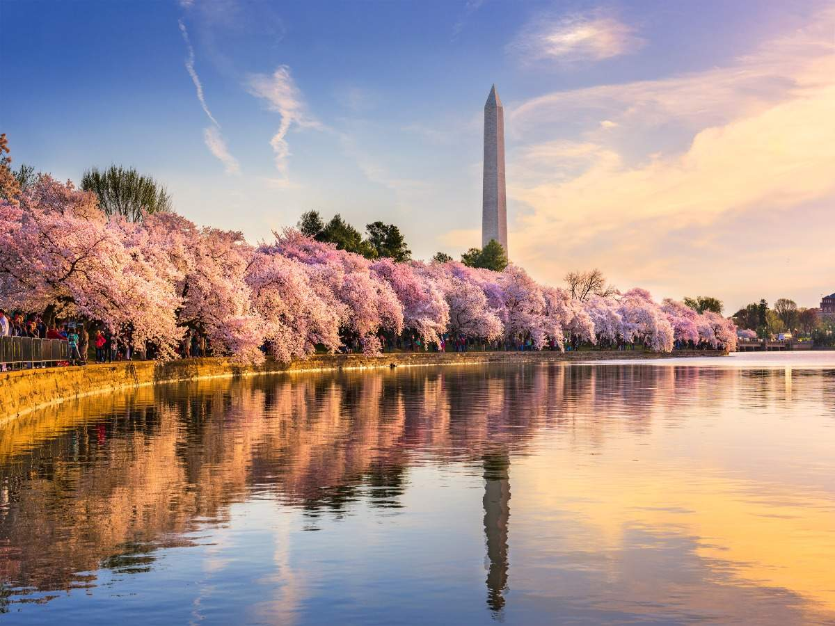 Enjoy Washington DC's cherry blossom festival from your home