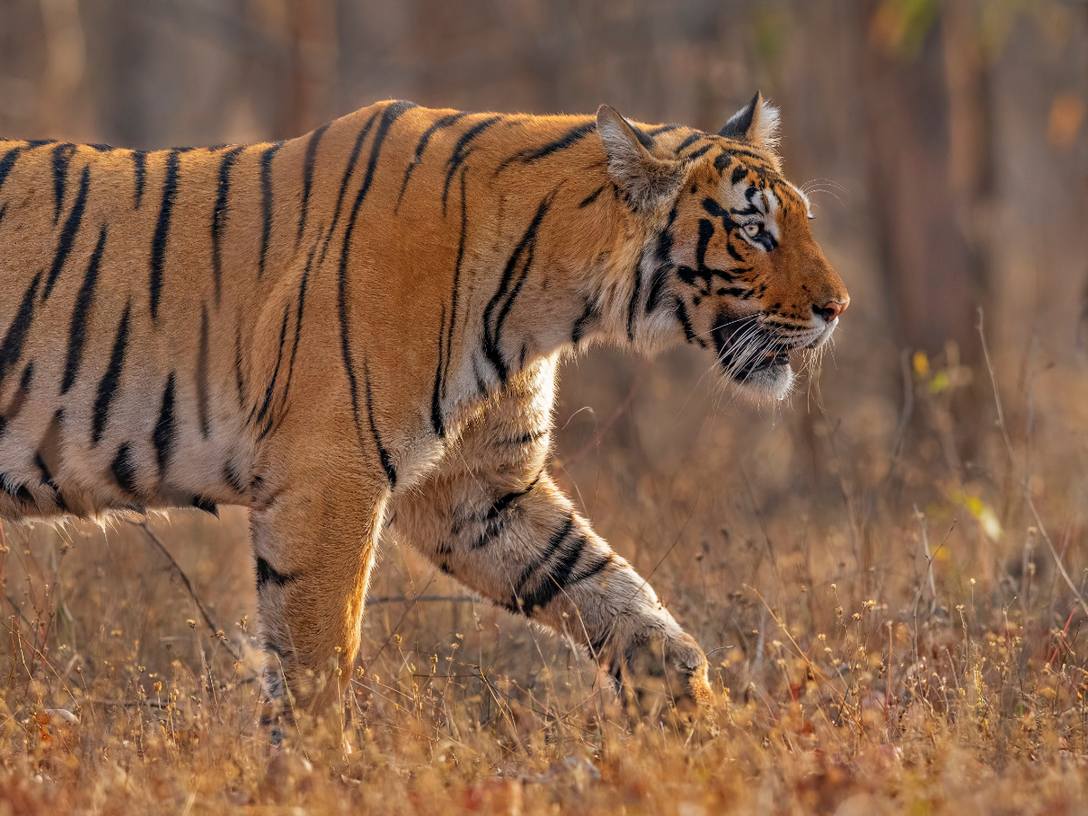 Pench and other parks to remain closed till April 30