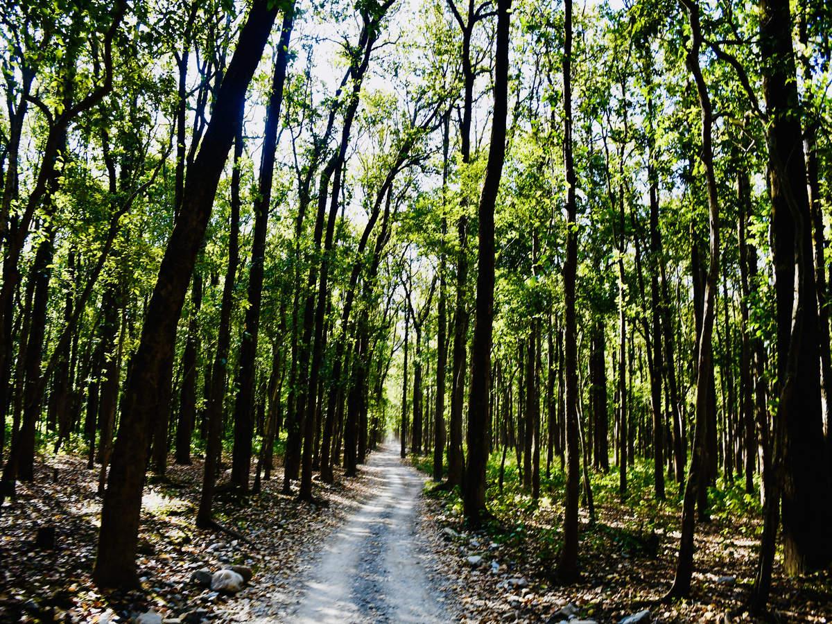 Sitabani Wildlife Reserve–where Ramayana's goddess Sita lived during her exile