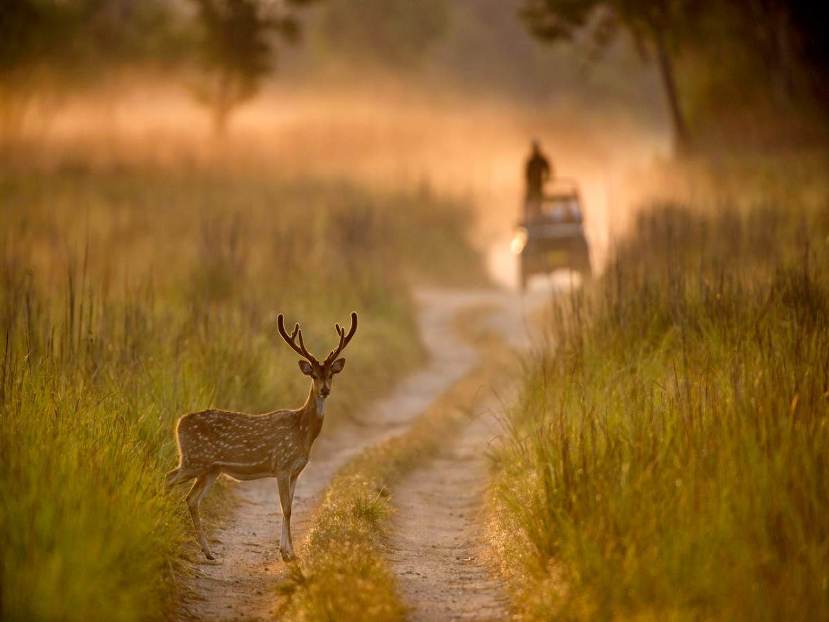 COVID 19: India shuts down all national parks and sanctuaries