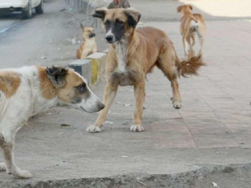 odisha-govt-feeding-stray-animals-during-covid-lockdown
