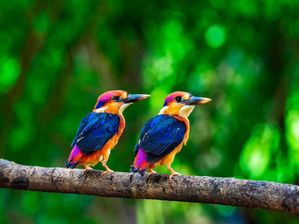 Birdwatching hotspots in Maharashtra